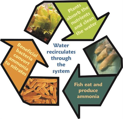 from https://www.theaquaponicsource.com/school-aquaponics/